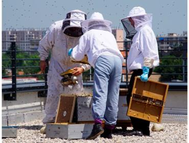 miel-serpollet-2